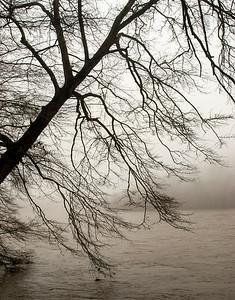Chattahoochee Morning Fog