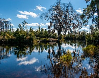 Blue in the Okefenokee