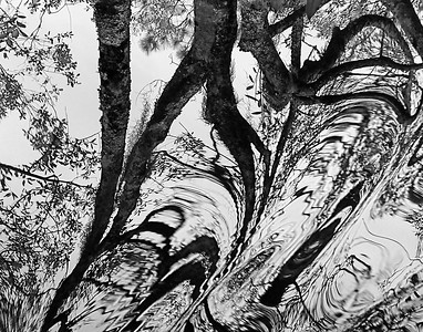 Okefenokee Reflection in Black and White