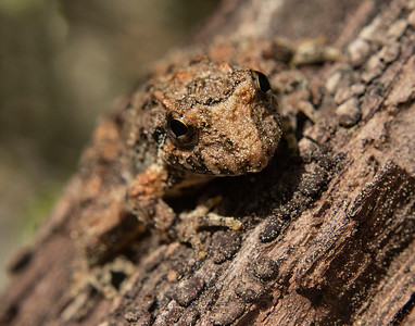 Amphibians with Matching Log