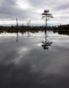 Okefenokee TRee reflection