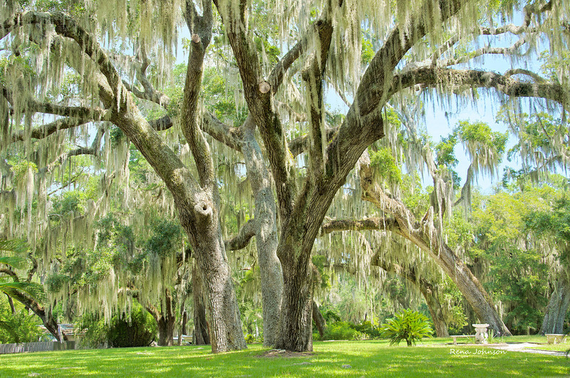 Sapelo Island State Park Mansion Grounds