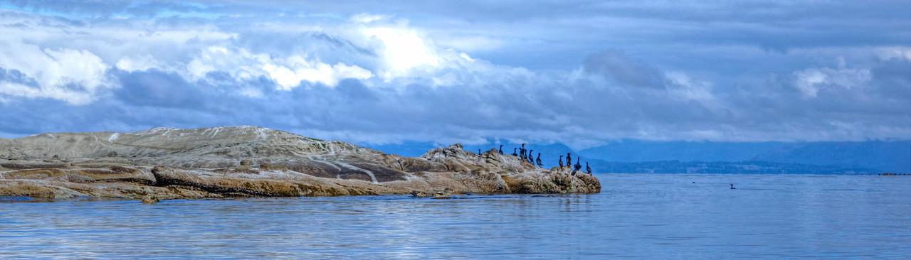 Cormorants on Seal Rock Panorama