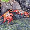 Punta Espinoza 004
