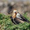15 Genovese Birds 012