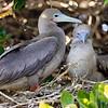 15 Genovese Birds 014