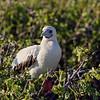 15 Genovese Birds 008