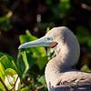 15 Genovese Birds 016