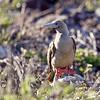 15 Genovese Birds 004