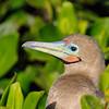 15 Genovese Birds 019