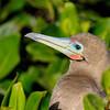 15 Genovese Birds 018