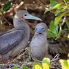 15 Genovese Birds 013