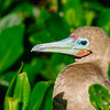 15 Genovese Birds 020