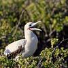 15 Genovese Birds 006