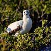 15 Genovese Birds 005