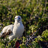 15 Genovese Birds 009