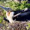 15 Genovese Birds 011