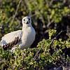 15 Genovese Birds 007