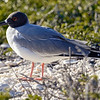 15 Genovese Birds 002