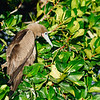 15 Genovese Birds 015
