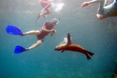Snorkeling, Sullivan Bay, Bartolome Island, Galápagos Islands, Ecuador