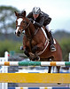 Gala Horse Shows Jazz Hunter Jumpers Grand Prix 01 20 2007 555 11x14b