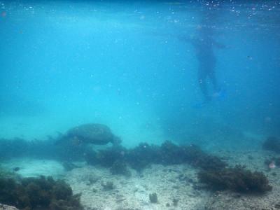 Sea Turtle - Snorkeling