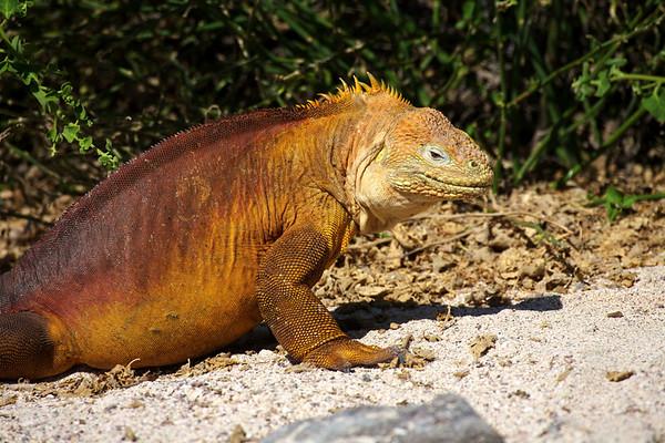 Galapagos Islands, Ecuador 2011
