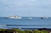 Tatoosh_in_Galapagos_18337
