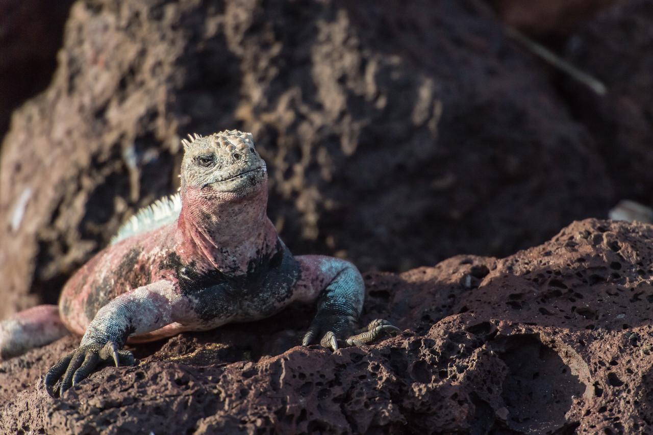 Galapagos_Punta_C-1823