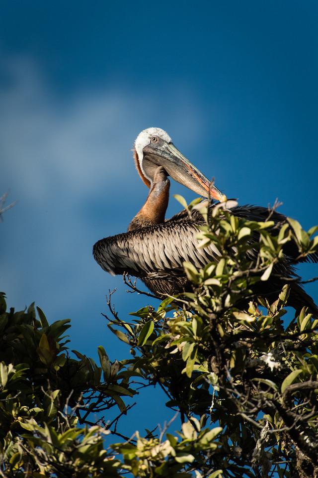 Galapagos_Punta_C-2109