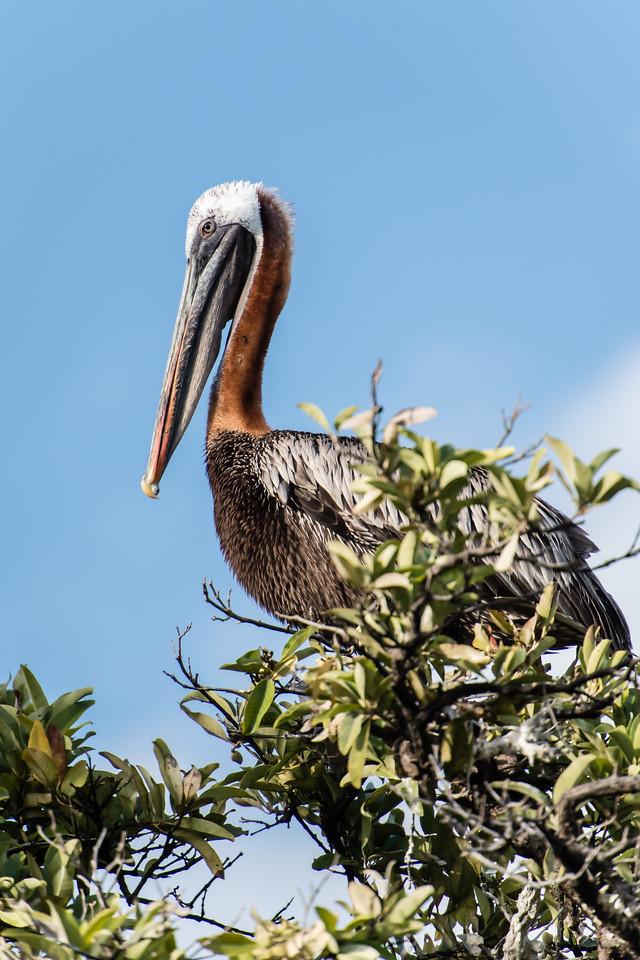 Galapagos_Punta_C-2193