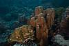 Coral IDs needed<br /> Blacktip cardinalfish<br /> Cabo Marshall, Isabela Island, Galapagos, Ecuador