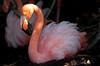 Flamingo_20201