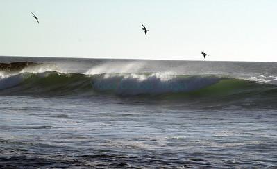 Surf_CDouglas_5381