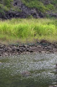 33453 Freshwater Bay pond