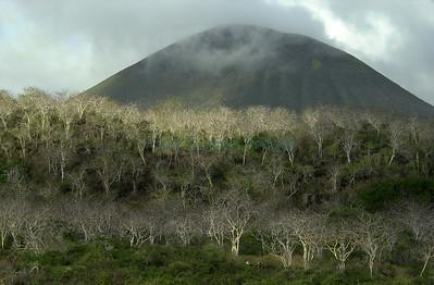 35047 Cerro Paja, Floreana