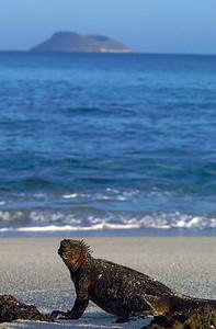 Marine Iguana and Daphne Island