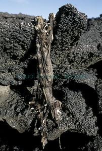 Mig hanging skeleton slide_14_9130
