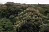 Miconia forest NO cinchona 1964