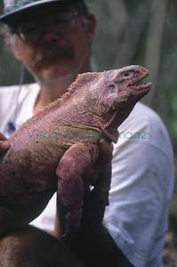 S00189_Pink iguana_Conolophus