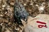 Iguana_hatching_18120