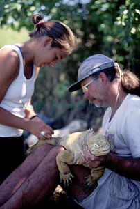 Howard Snell and student Consuelo Guayabamba  marking a Bahia Urvina iguana with a PIT tag summer 1998 Galapagos