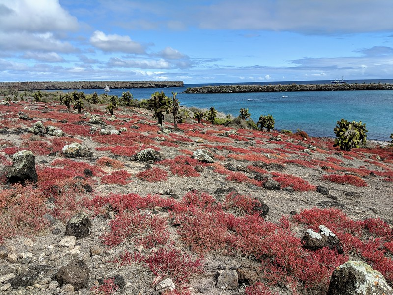 Galapagos Islands Trip - red landscape