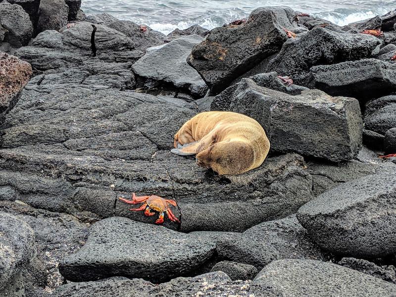 Galapagos Islands Trip - Sea lion and crab