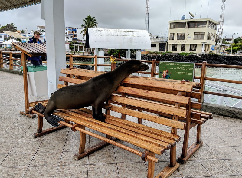 Galapagos Islands Trip - Sea lion on a bench