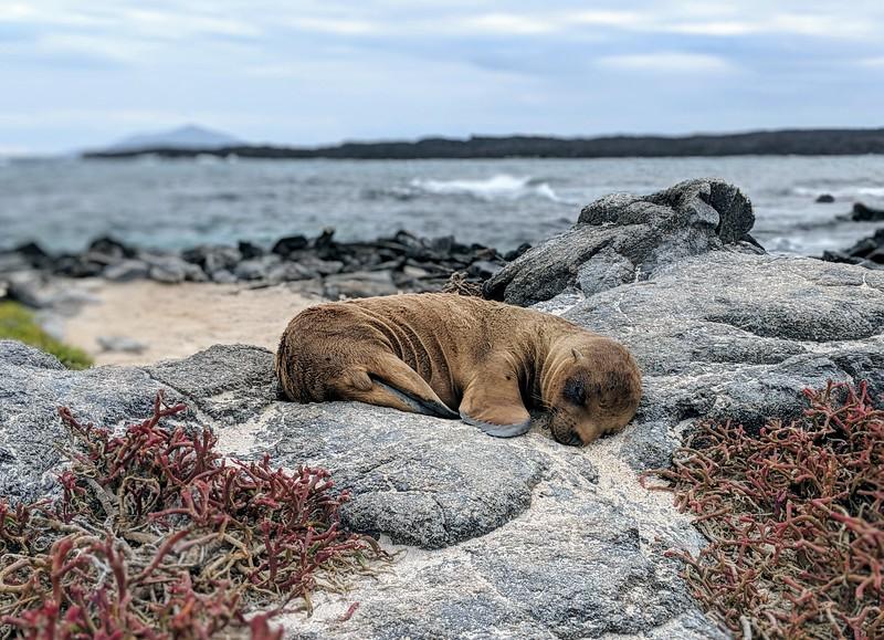 Galapagos Islands Trip - Baby sea lion sleeping