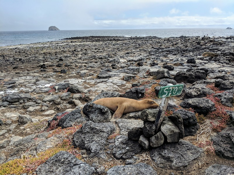 Galapagos Islands Trip - Sea lion sleeping