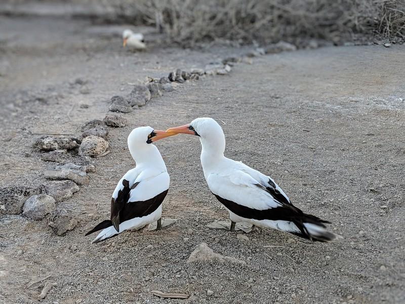 Galapagos Islands Trip - Birds