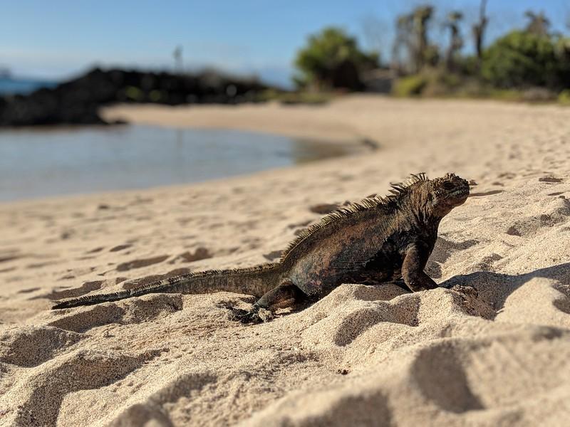Galapagos Islands Trip - Marine iguana